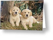 Golden Retriever Puppies In The Woods Greeting Card