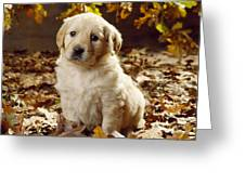 Golden Retriever Puppy Dog In Fallen Greeting Card