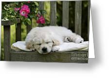 Golden Retriever Puppy Sleeping Greeting Card