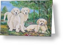 Golden Retriever Puppy Trio  Greeting Card