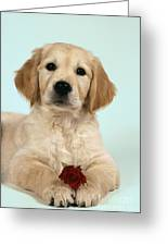 Golden Retriever Puppy With Rose Greeting Card