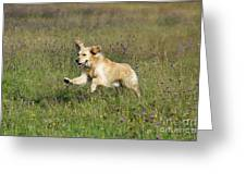 Golden Retriever Running Greeting Card