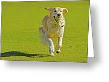 Golden Retriever Running On A Green Greeting Card