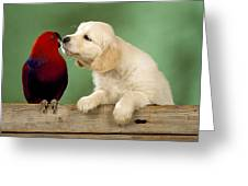 Golden Retriever With Grand Eclectus Greeting Card