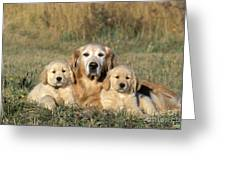 Golden Retriever With Puppies Greeting Card