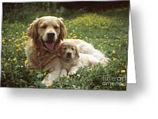 Golden Retrievers Dog And Puppy Greeting Card