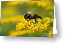 Golden Rod And Bumblebee Greeting Card