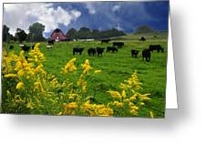 Golden Rod Black Angus Cattle  Greeting Card