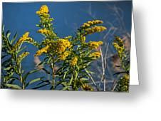 Golden Rods At Northside Park Greeting Card