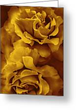 Golden Yellow Roses Greeting Card
