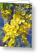 Golden Shower Tree - Cassia Fistula - Kula Maui Hawaii Greeting Card
