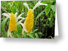 Golden Shrimp Plant Or Lollipop Plant Greeting Card