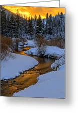 Golden Silence Greeting Card