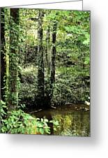 Golden Silence In The Forest Greeting Card