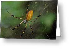 Golden Silk Spider 10 Greeting Card