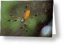 Golden Silk Spider 9  Greeting Card