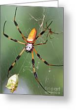 Golden Silk Spider Capturing A Stinkbug Greeting Card