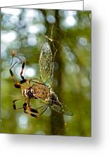 Golden Silk Spider Greeting Card