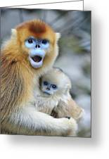 Golden Snub-nosed Monkey And Young China Greeting Card