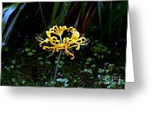 Golden Spider Lily Greeting Card