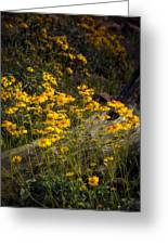 Golden Spring Flowers  Greeting Card