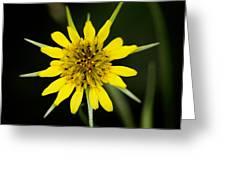 Golden Star Flower Yellow Salsify Glacier National Park Greeting Card
