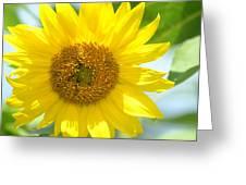 Golden Sunflower - 2013 Greeting Card