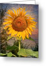 Golden Sunflower Greeting Card by Adrian Evans