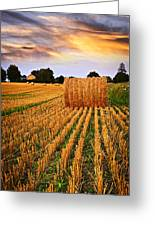 Golden Sunset Over Farm Field In Ontario Greeting Card