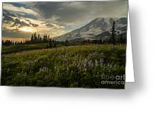 Golden Sunstar Rainier Meadows Greeting Card