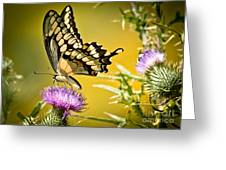 Golden Swallowtail Greeting Card