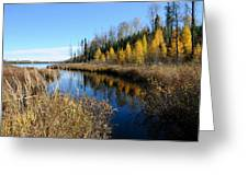 Golden Tamaracks Greeting Card