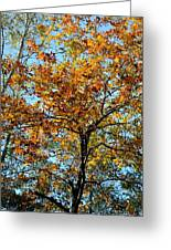 Golden Tree Lined Sky Greeting Card