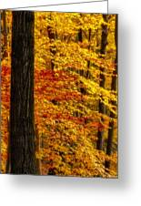 Golden Trees Glowing Greeting Card