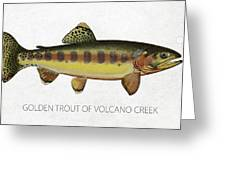 Golden Trout Of Volcano Creek Greeting Card