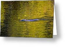 Golden Waters Greeting Card