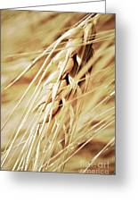 Golden Wheat Field Greeting Card