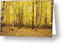 Golden Woods Greeting Card
