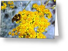 Golden Yarrow And Visitor Greeting Card