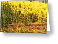 Golden Yellow Fall Boreal Forest In Yukon Canada Greeting Card