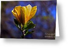 Golden Yellow Magnolia Blossom Greeting Card