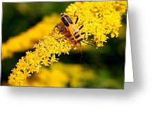 Goldenrod Beetle Greeting Card