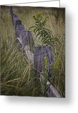Goldenrod By The Fence Greeting Card
