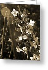 Goldenrod In Sepia Greeting Card