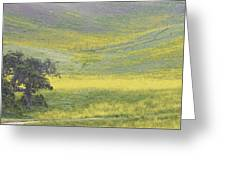 Goldenrod Oak Santa Ynez California 3 Greeting Card