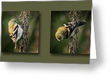 Goldfinch Collage Greeting Card