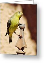 Goldfinch Contemplating 031015ac Greeting Card