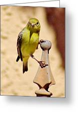 Goldfinch Hanging On 031015ac Greeting Card
