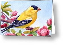 Goldfinch In A Crab Apple Tree Greeting Card