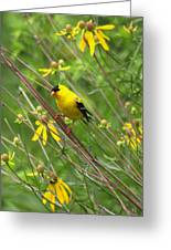 Goldfinch In The Flowers Greeting Card